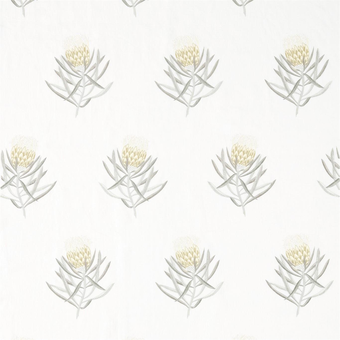 PROTEA FLOWER DAFFODIL