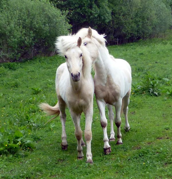 Díli från Hvidagården busar med sin bror, Glitri