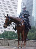 Houston Police Horses Go Barefoot, part 1