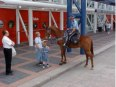 Houston Police Horses Go Barefoot, part 2