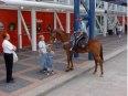 Houston Police Horses Go Barefoot, part 2