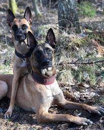 Föreläsning Hundars samspel - Föreläsning Hundars samspel