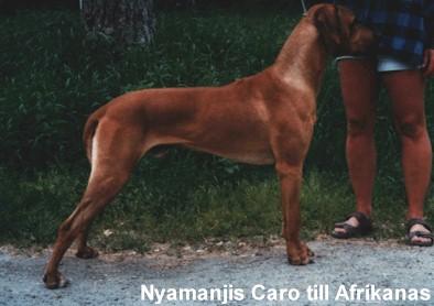 Nyamanjis Caro Till Afrikanas