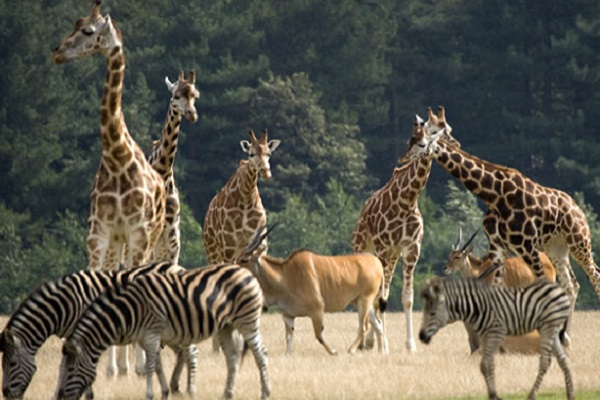 Bild: Knuthenborg Safaripark