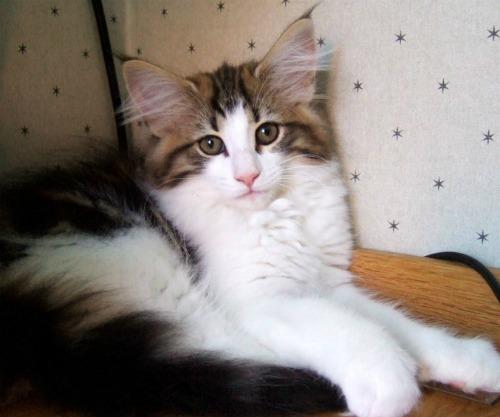 Vanilj - 3 months old