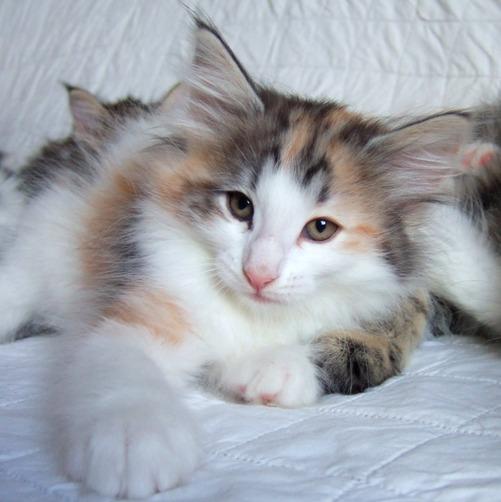 Kassis, 8 weeks old