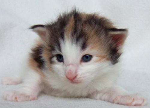 Kassis, 3 weeks old
