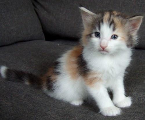 Kassis, 4 weeks old