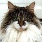 GIC S*Just Catnap's Fabia