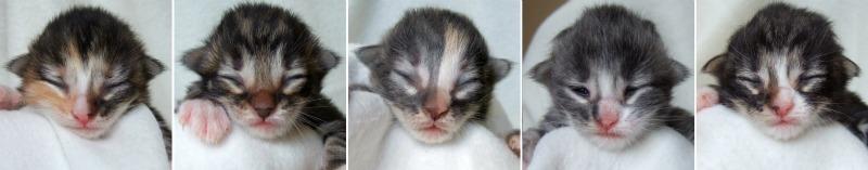 - 1 week old -