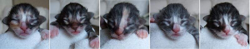 - newborn -
