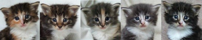 - 4 weeks old -