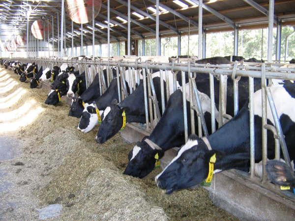 Westfalia visningsgård använder Envirolyte