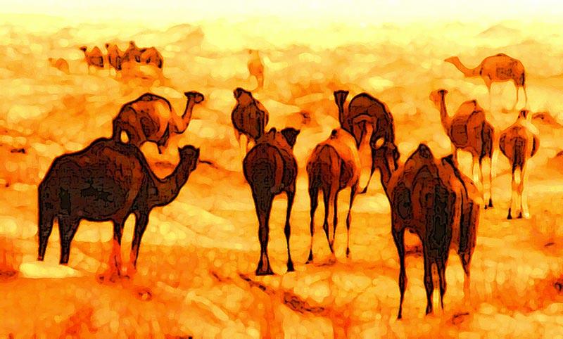 camele
