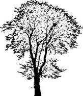 Encaustic Art - Stämpel - Askträd