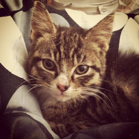 Vimse och Amiris har nu blivit friska och tuffa små katter. De äter med god  aptit och har lagt sitt fräsande bakom sig 8bbc27cc33581