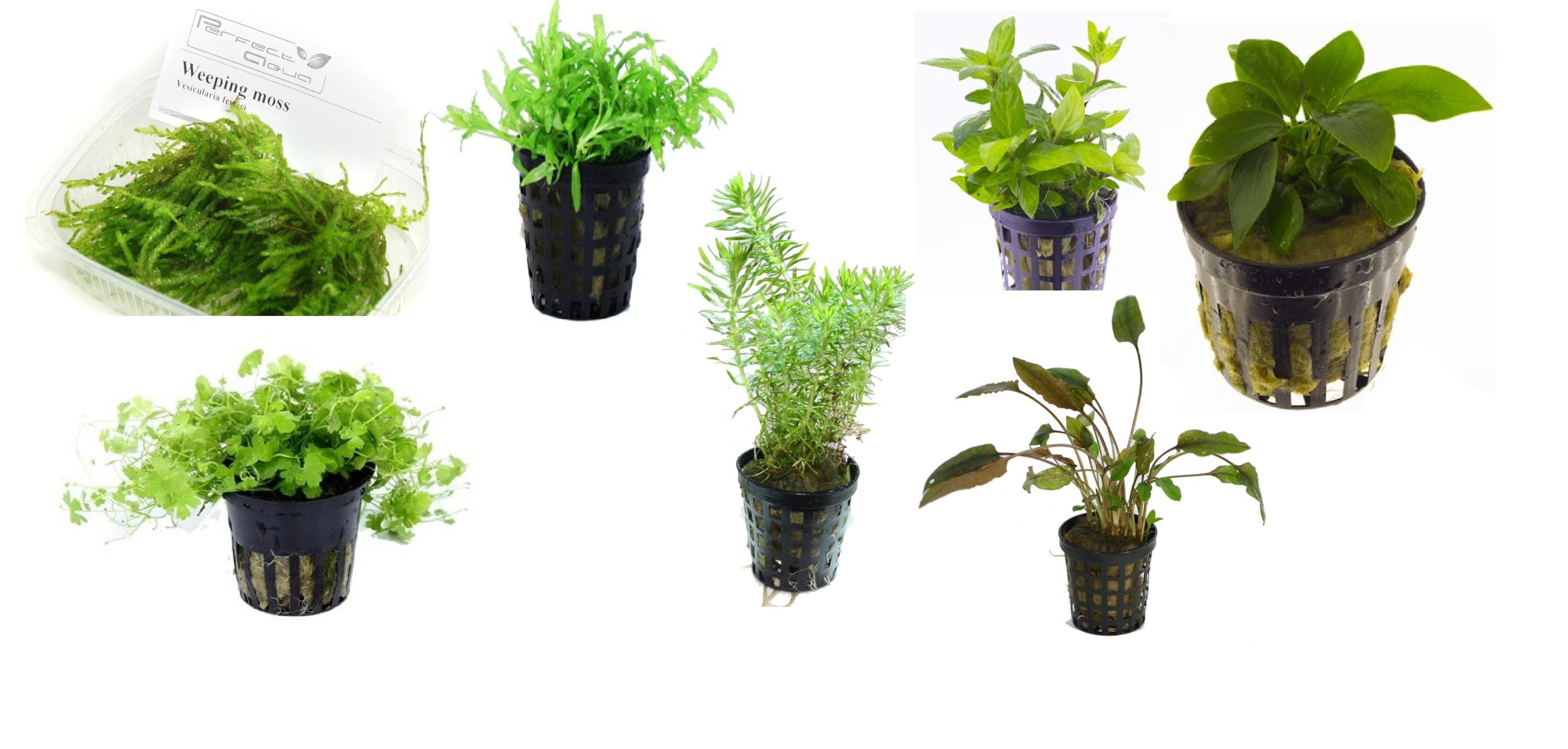 växtpaket nano
