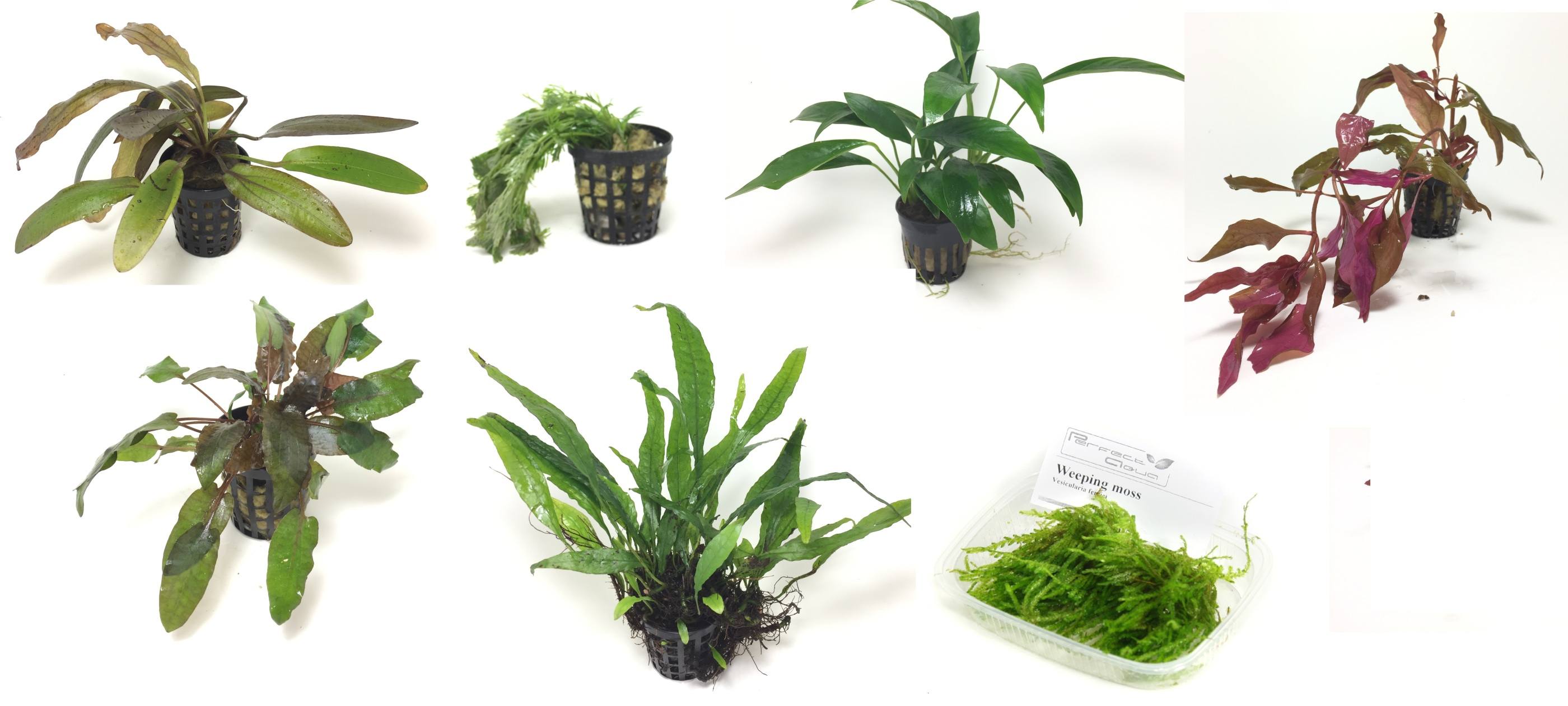 Växtpaket7vxtr