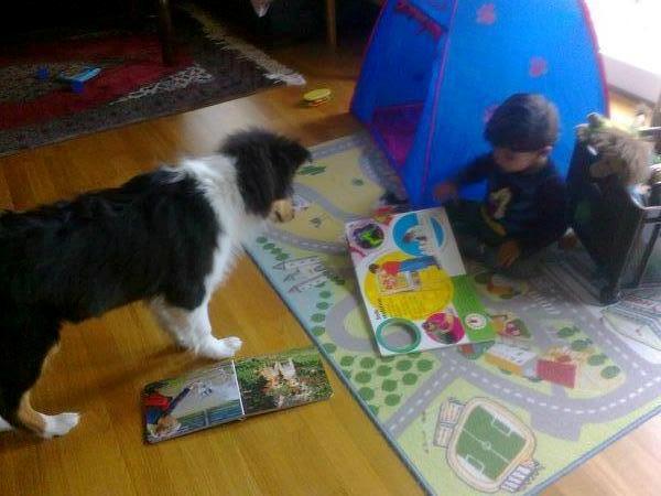 Trico med lillhusse Trym  i sitt nya hem i Norge Trym läser saga för sin nya vänn .