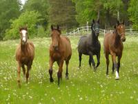 Sessan e Coriall, Spirit e Spender S, Pearl V och Corina.