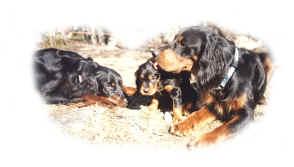 Blissi och Pino med sin avkomma Anisette